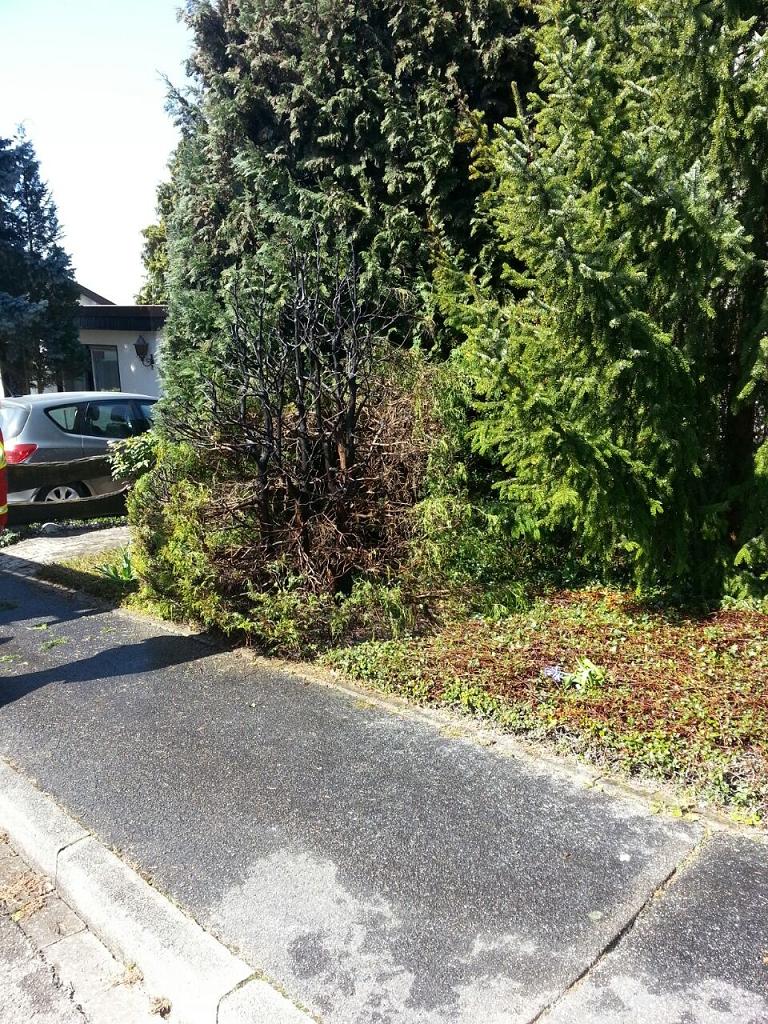 Brand einer Hecke mit Baum, Bamlach (1)