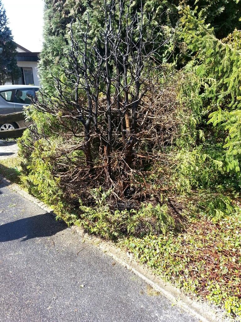 EB12-2015 Brand einer Hecke mit Baum, Bamlach